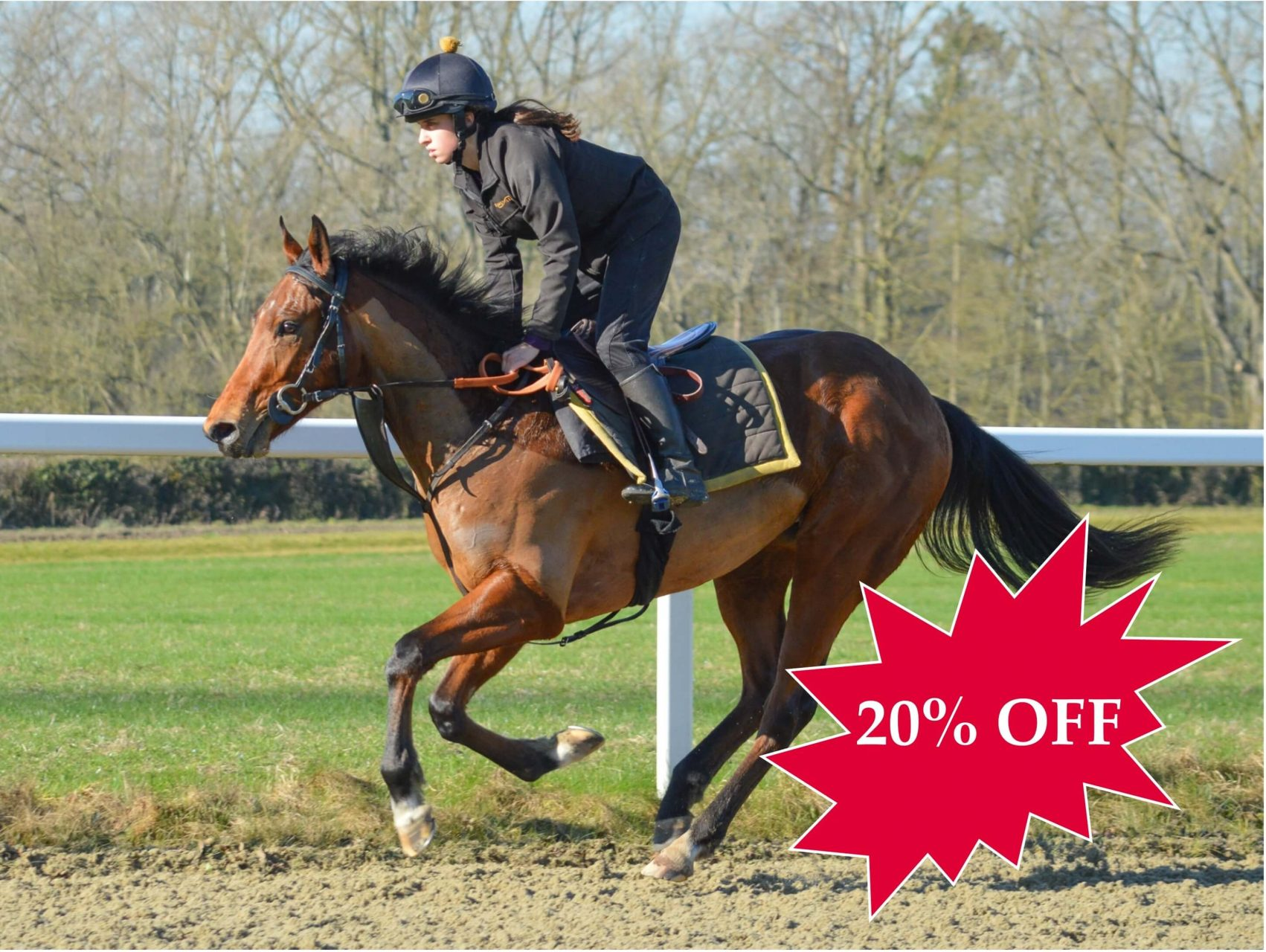 20% OFF ACCLAMATION 2YO COLT RACEHORSE SYNDICATE TRAINED BY ANDREW BALDING