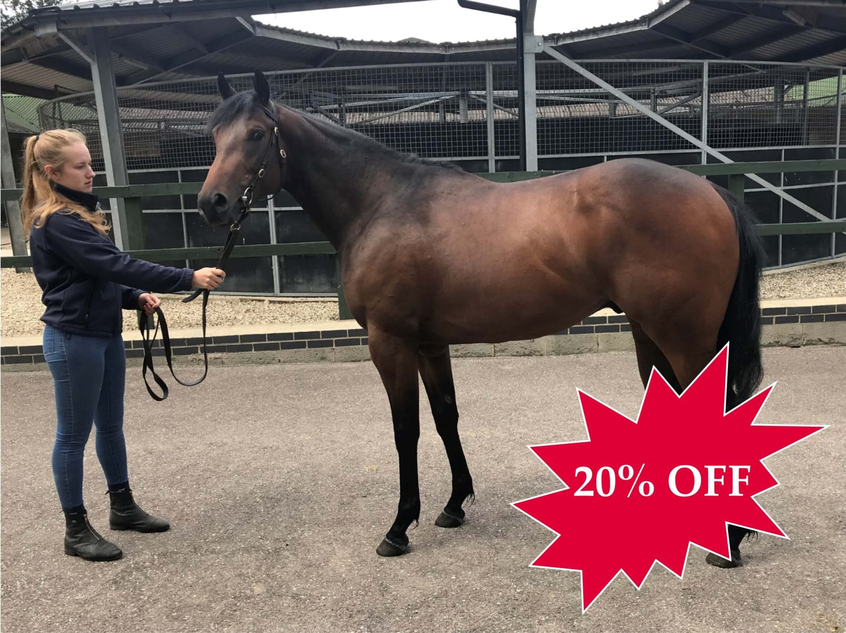 20% OFF KYLLACHY 2YO COLT TRAINED BY ROGER VARIAN (1)