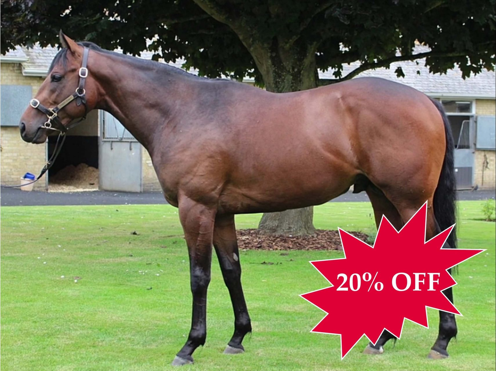 20% OFF MUSICALITY 2YO COLT TRAINED BY ROGER VARIAN