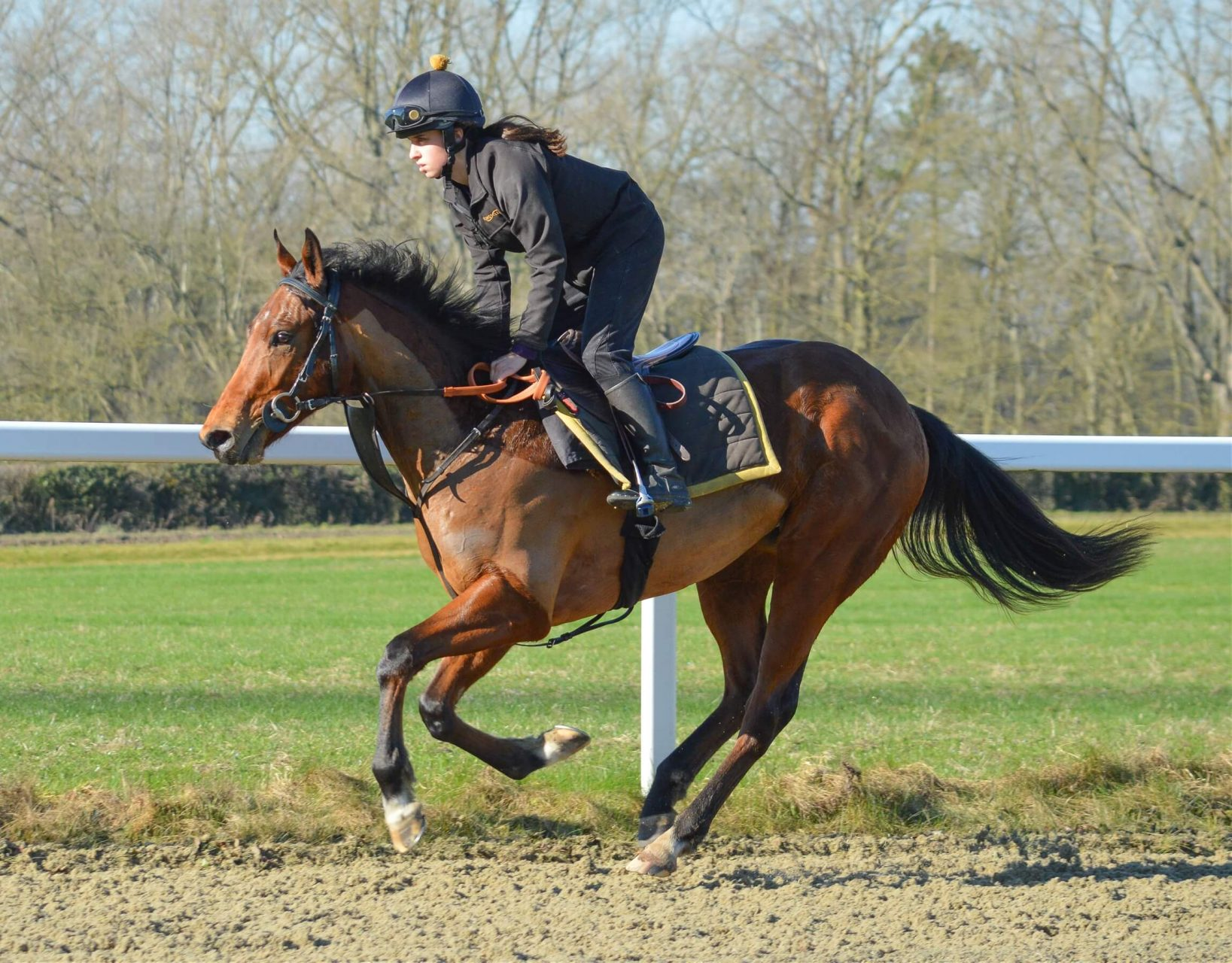 Acclamation 2yo colt racehorse syndicate trained by Andrew Balding on gallop 19 February 2019