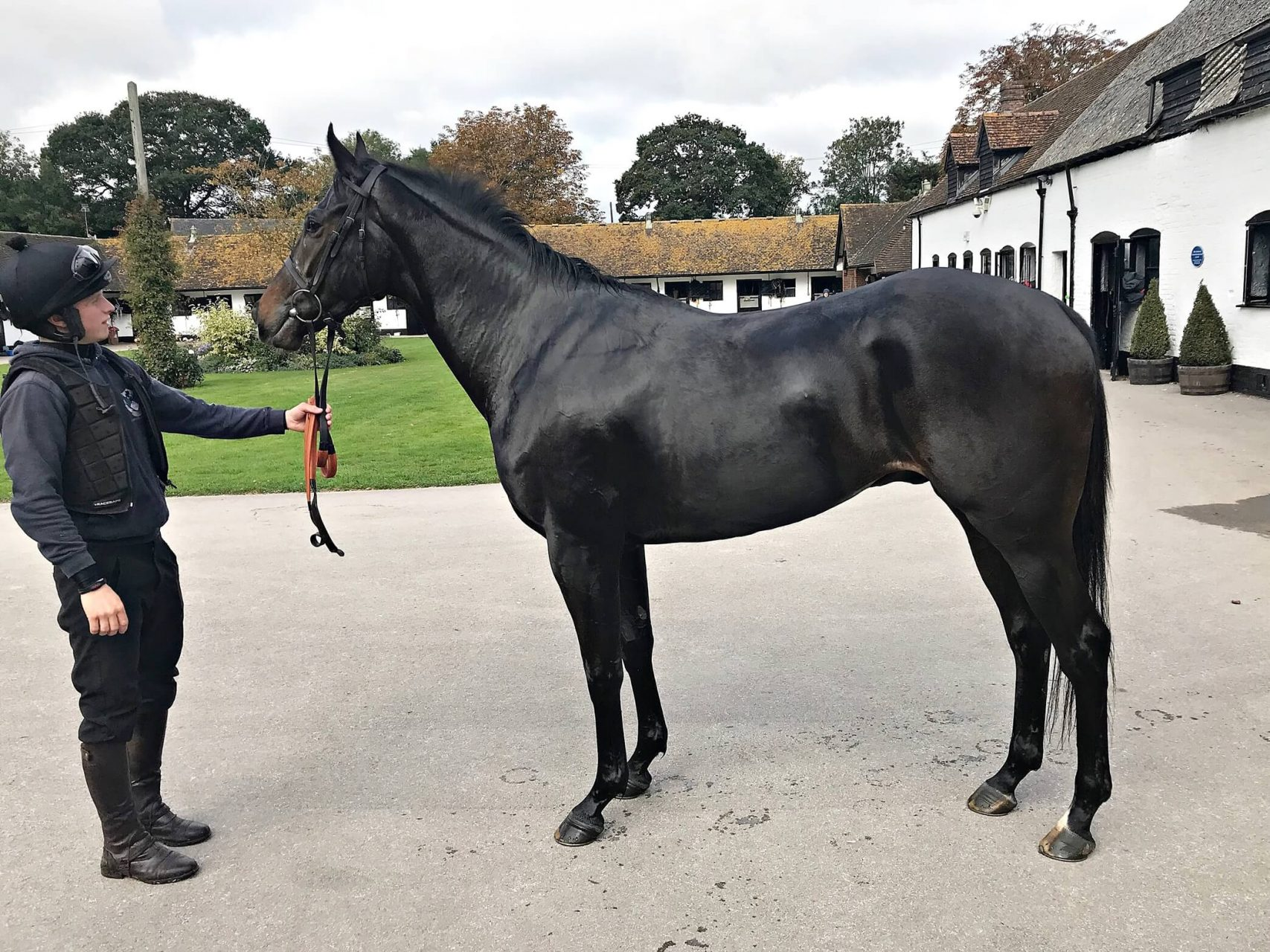 Arcadian Pearl National Hunt Trained by Nicky Henderson, Cheltenham - Biddestone Racehorse Syndicates, Newmarket, Lambourne, Cheltenham, Marlbrough | Biddestone Racing