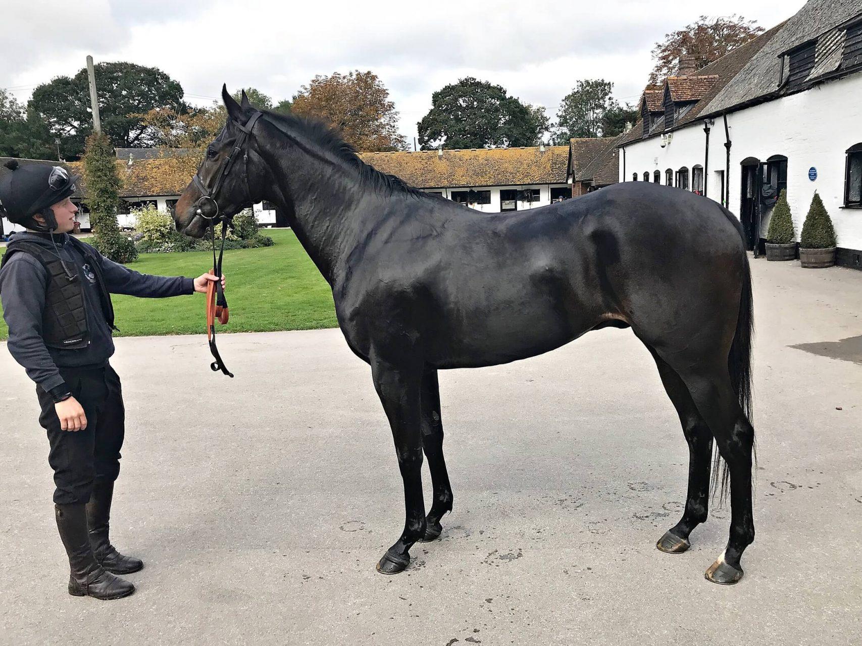 Arcadian Pearl National Hunt Trained by Nicky Henderson, Cheltenham - Biddestone Racehorse Syndicates, Newmarket, Lambourne, Cheltenham, Marlbrough | Biddestone Racing