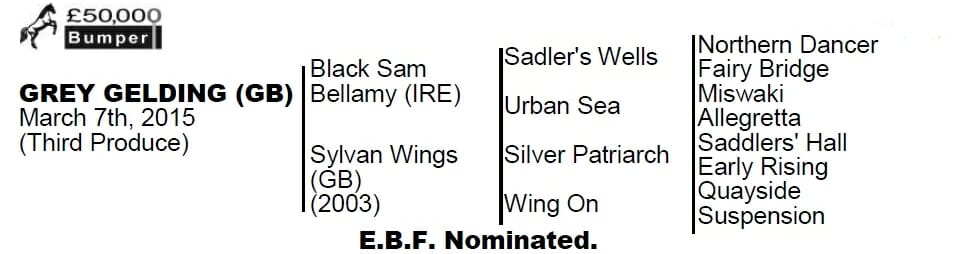 Black Sam Bellamy, Sire Table - Flat Racer, Trained by Fergal O'Brien Cheltenham - Biddestone Racehorse Syndicates, Newmarket, Lambourne, Cheltenham, Marlbrough | Biddestone Racing