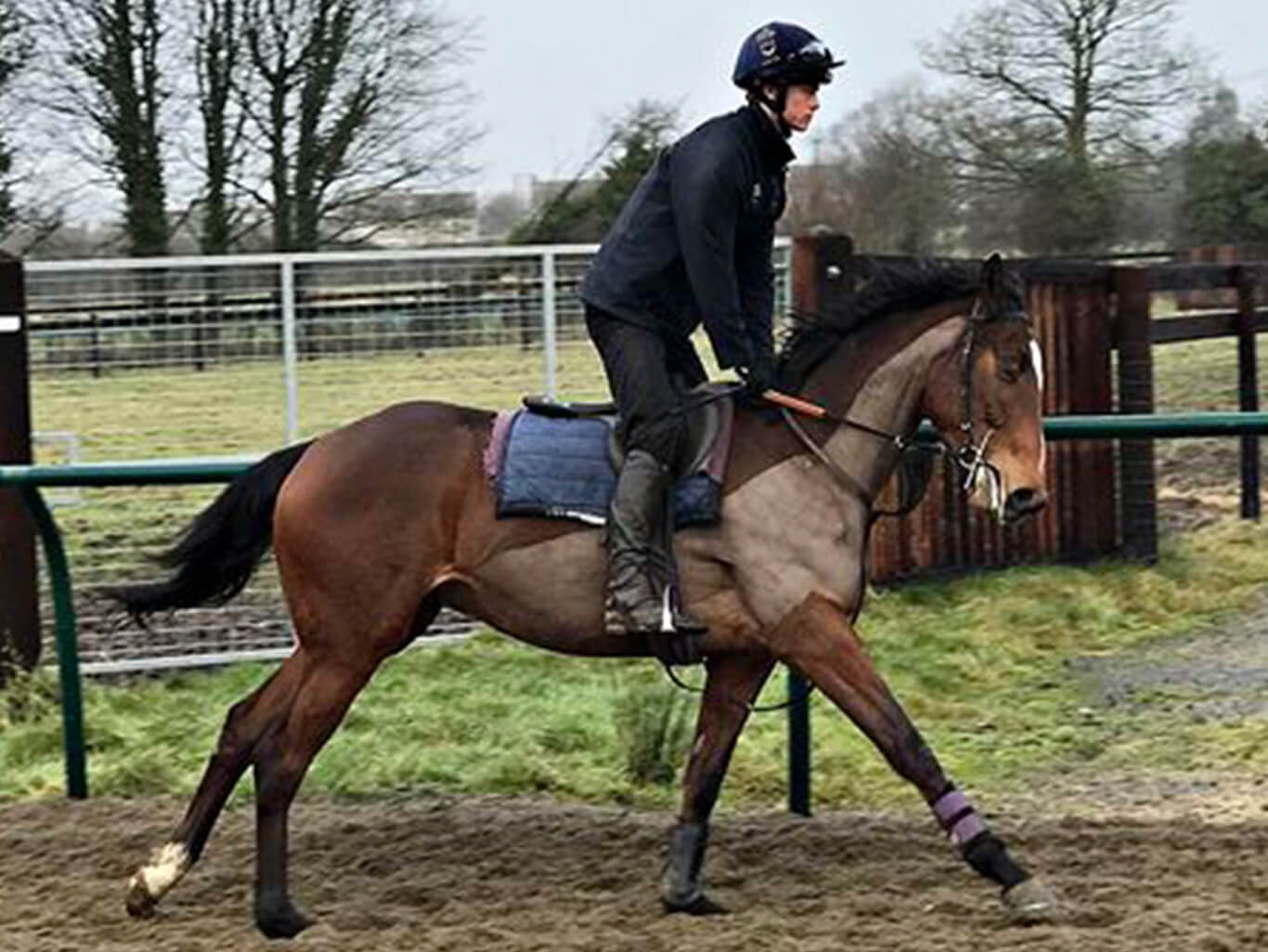 Queen of Paris, Trained by William Knight | Biddestone Racing