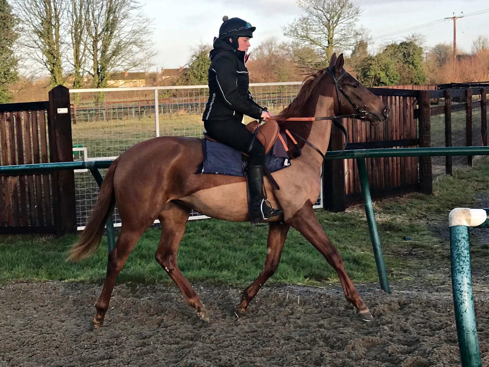 Lope De Vega Stylish Filly, Flat Racer Trained by Richard Hannon, Marlbrough - Biddestone Racehorse Syndicates Logo, Newmarket, Lambourne, Cheltenham, Marlbrough | Biddestone Racing