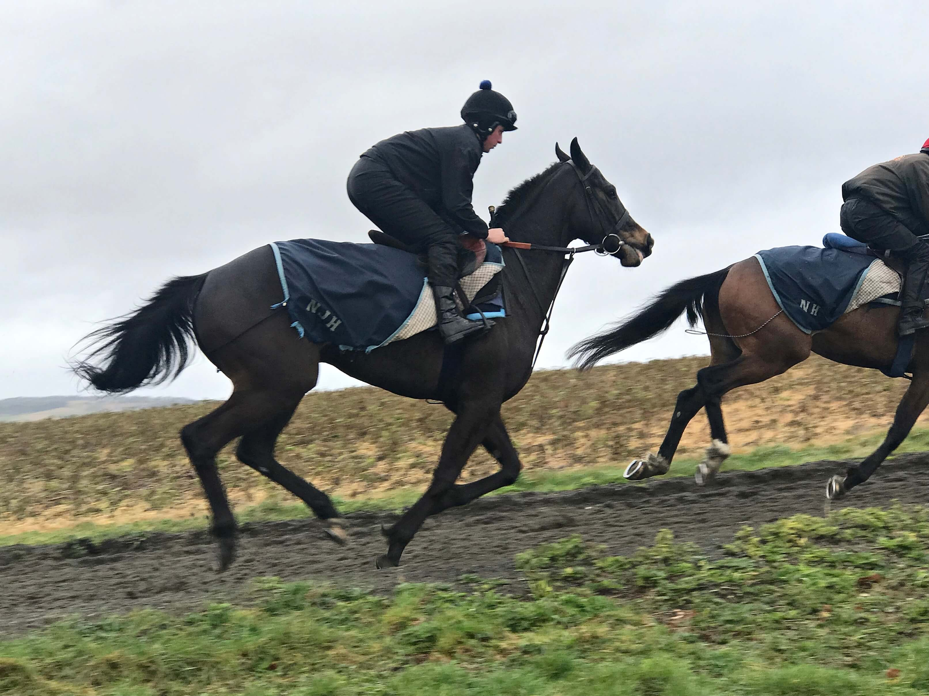 Arcadian Pearl cantering on 6 March 2019